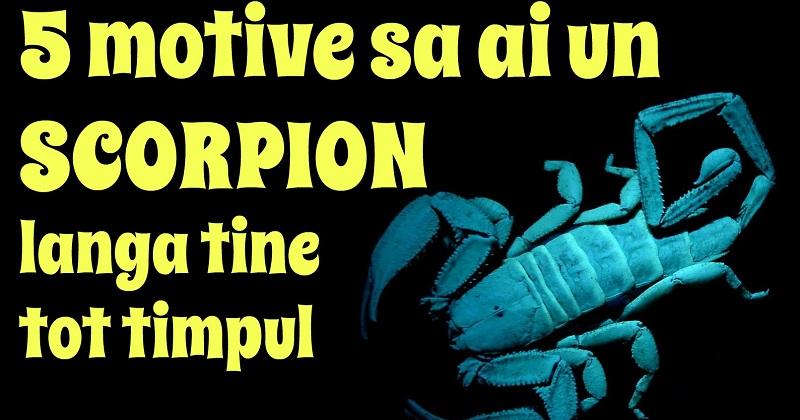 Potriveste scorpion cu barbatul varsator se femeia Compatibilitate in
