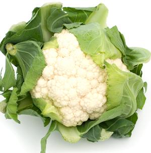 Conopida, legume