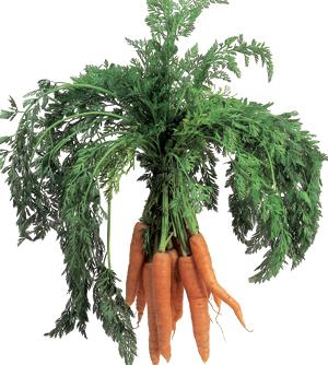 Morcov, legume