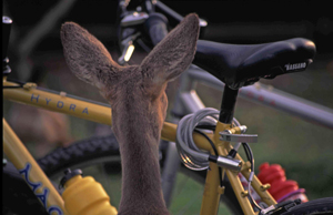 Caprioara si bicicleta