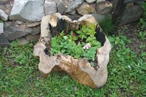 Gradina, jardiniera