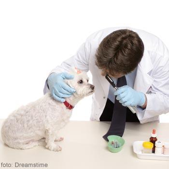 medicul veterinar