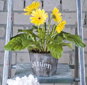 Galeata cu flori