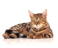 Purina ONE – sanatate vizibila pentru pisica ta
