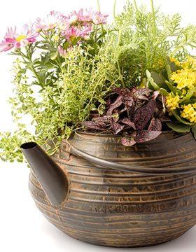 Flori in ghivece deosebite