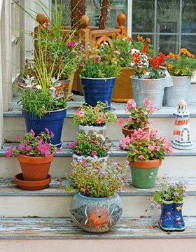 Flori in ghivece decorative