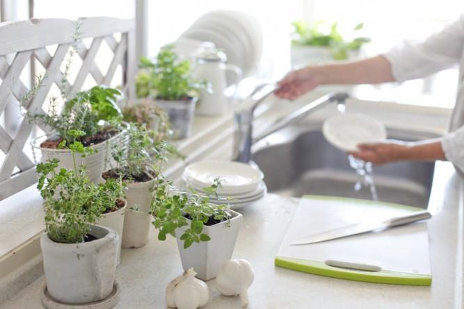 plante-zodii