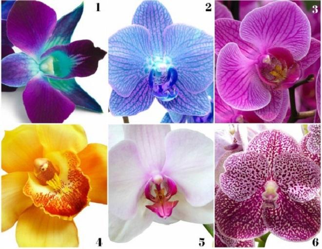 testul orhideei