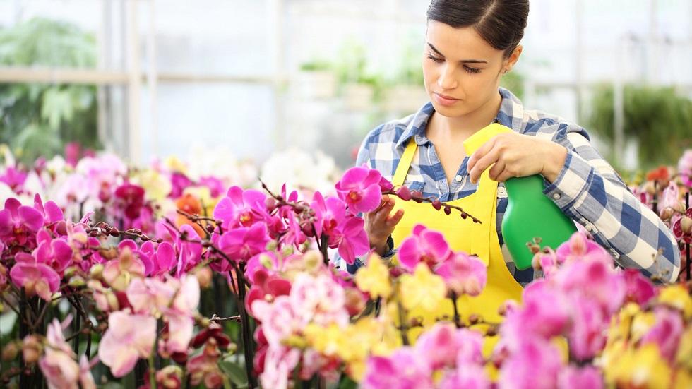 De ce să folosești bicarbonat de sodiu pentru flori