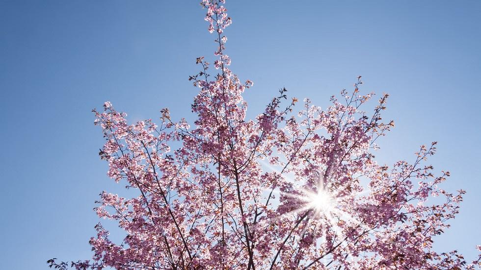 Echinocțiul de primăvară
