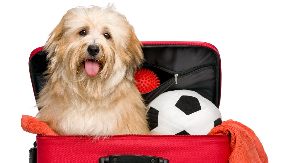 Ce reguli trebuie să respecți dacă vrei să îți iei animalul de companie cu tine în concediu