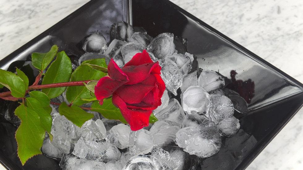 Cum te ajută cuburile de gheață să îți îngrijești plantele de cameră
