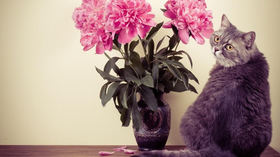 Planta care poate pune în pericol sănătatea pisicii tale