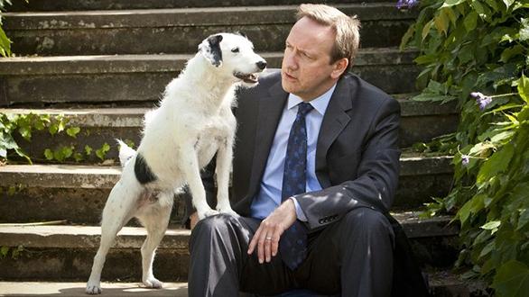 Sykes, câinele actor din Midsomer