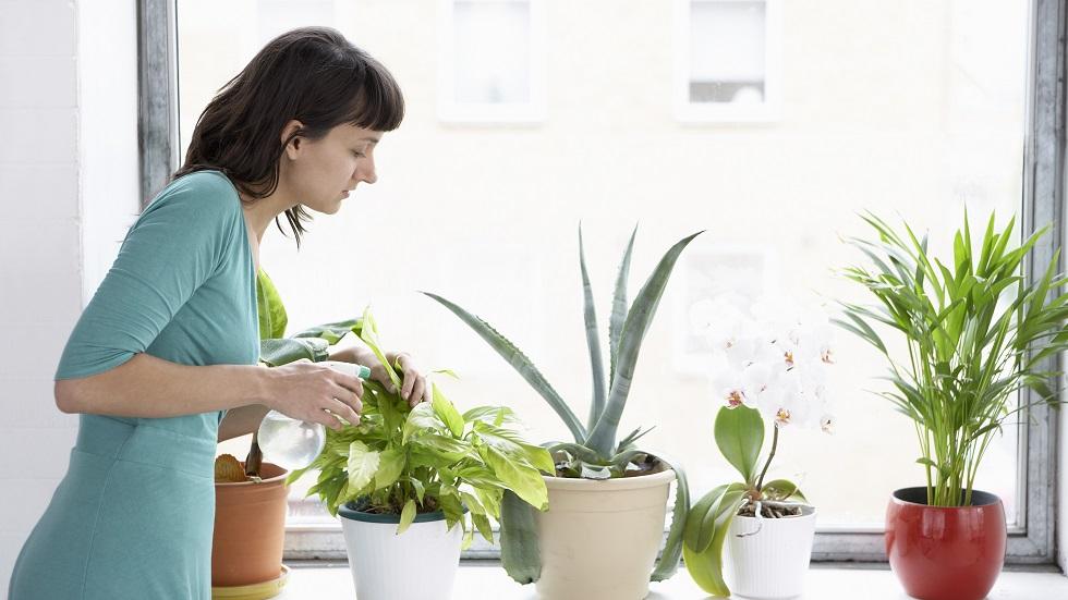 Cum să ai grijă de plante când pleci în concediu