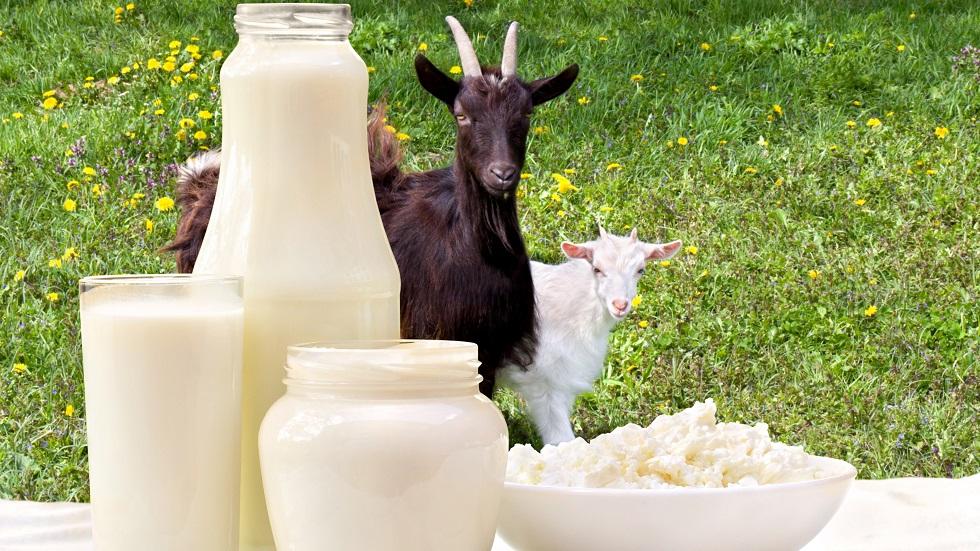 laptele de capră previne cancerul și tratează boli