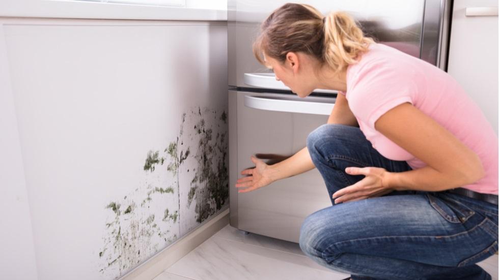 Cum îți afectează mucegaiul sănătatea