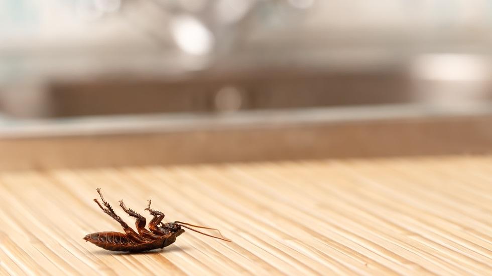 Plante care țin gândacii departe de casa ta