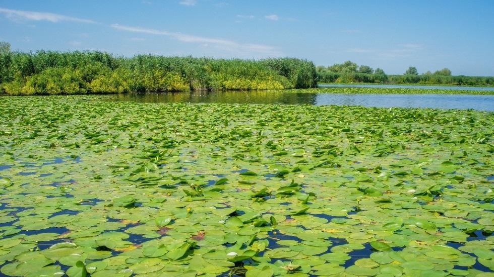 Black Friday! 50% reducere la vacanțe în Delta Dunării
