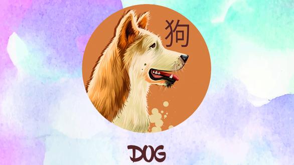 Anul Porcului de Pământ pentru Zodia Câinelui