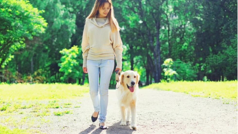 Cum să îți plimbi câinele dacă vrei să nu îți pui sănătatea în pericol