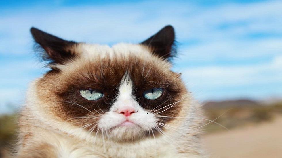 pisica grumpy cat