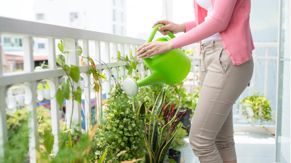 Nu mai uda plantele de apartament cu apa de la robinet