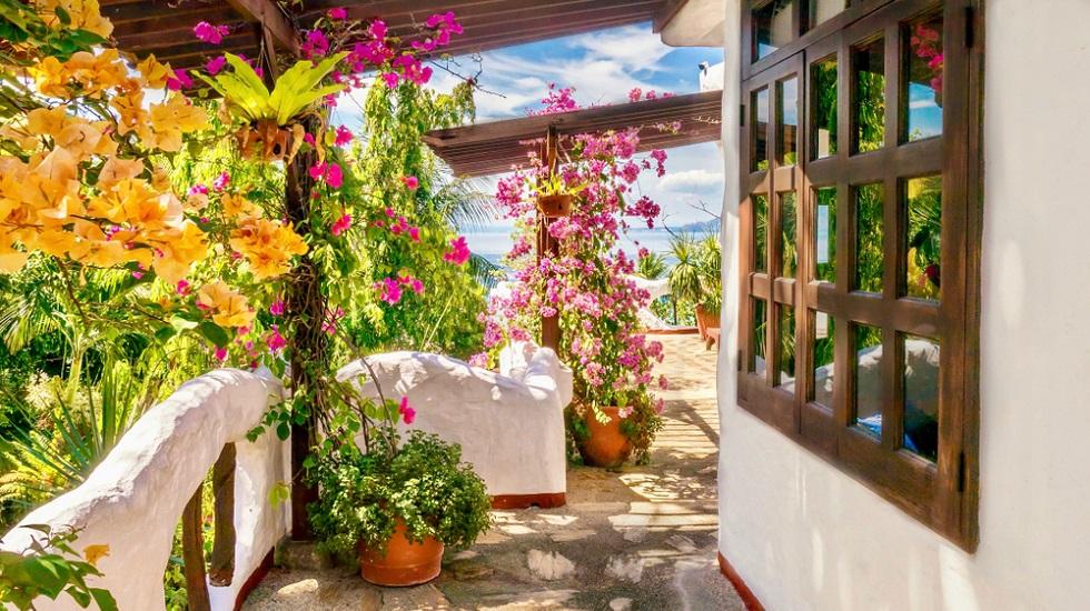 flori căţărătoare pentru balcon