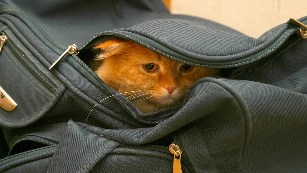 pisica torturata de un roman in italia pentru a se razbuna pe fosta iubita