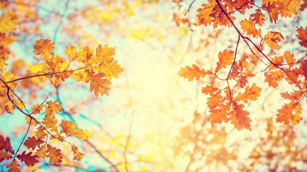 Soarele în Balanță