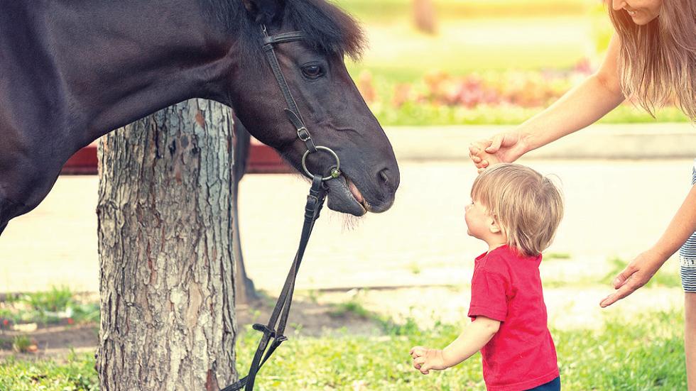 terapia asistata de animale