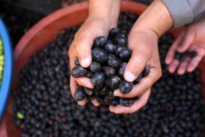 crisberries vă fac să pierdeți în greutate)